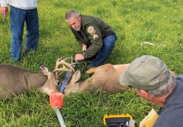 FWP Tangled Buck