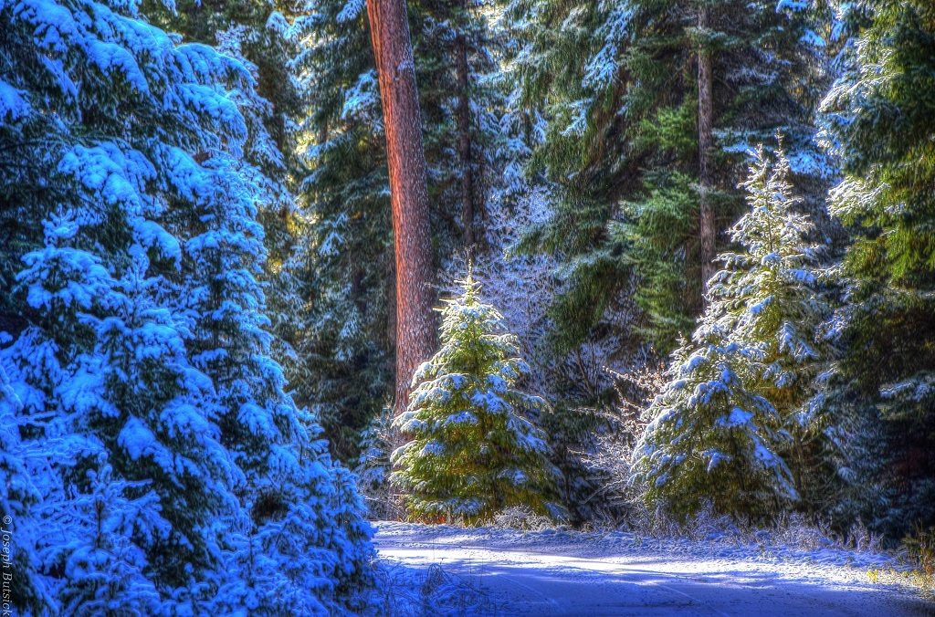 Forest Christmas Tree