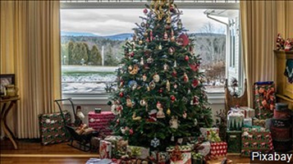 Fake Christmas Tree.Real Or Fake Christmas Tree Competition Heats Up