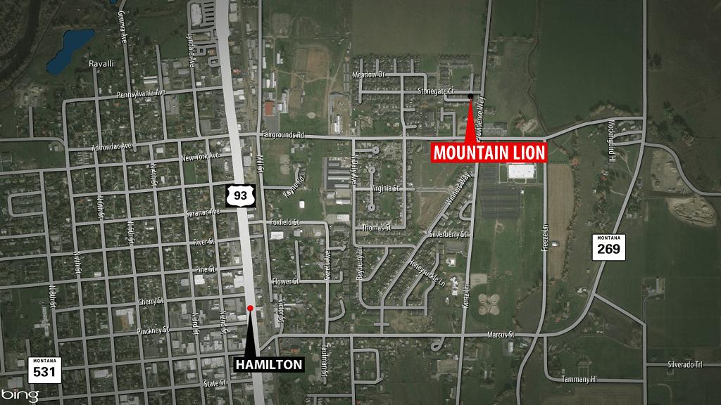 Hamilton Mountain Lion