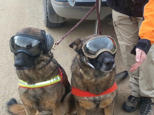 True North Search Dogs