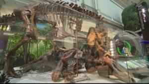 Montana T. Rex