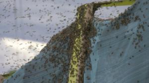 Bees in Bozeman
